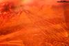 http://mczbase.mcz.harvard.edu/specimen_images/entomology/paleo/large/PALE-6766_syn5_Nematocera.jpg
