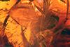 http://mczbase.mcz.harvard.edu/specimen_images/entomology/paleo/large/PALE-6771_syn1_Mycetophilidae.jpg