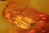 http://mczbase.mcz.harvard.edu/specimen_images/entomology/paleo/large/PALE-6783_Mycetophilidae.jpg