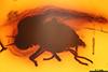 http://mczbase.mcz.harvard.edu/specimen_images/entomology/paleo/large/PALE-6820_Brachycera.jpg