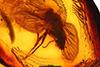 http://mczbase.mcz.harvard.edu/specimen_images/entomology/paleo/large/PALE-6840_Rhagionidae.jpg