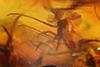 http://mczbase.mcz.harvard.edu/specimen_images/entomology/paleo/large/PALE-6865_syn1_Chironomidae.jpg