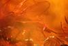 http://mczbase.mcz.harvard.edu/specimen_images/entomology/paleo/large/PALE-6865_syn2_Chironomidae.jpg