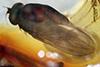 http://mczbase.mcz.harvard.edu/specimen_images/entomology/paleo/large/PALE-6901_Dolichopodidae.jpg