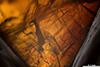 http://mczbase.mcz.harvard.edu/specimen_images/entomology/paleo/large/PALE-6937_Cretomiastor_ferejunctus_5x.jpg