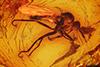 http://mczbase.mcz.harvard.edu/specimen_images/entomology/paleo/large/PALE-6956_Empididae.jpg