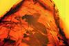 http://mczbase.mcz.harvard.edu/specimen_images/entomology/paleo/large/PALE-6969_Chironomidae.jpg