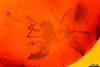 http://mczbase.mcz.harvard.edu/specimen_images/entomology/paleo/large/PALE-6971_Chironomidae.jpg