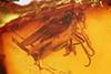 http://mczbase.mcz.harvard.edu/specimen_images/entomology/paleo/large/PALE-7204_Dolichopodidae_qm_1.jpg