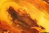 http://mczbase.mcz.harvard.edu/specimen_images/entomology/paleo/large/PALE-7209_Dolichopodidae.jpg