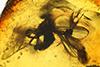 http://mczbase.mcz.harvard.edu/specimen_images/entomology/paleo/large/PALE-7238_Prohercostomus_noxialis.jpg