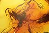 http://mczbase.mcz.harvard.edu/specimen_images/entomology/paleo/large/PALE-7245_Psychodidae.jpg