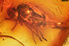 http://mczbase.mcz.harvard.edu/specimen_images/entomology/paleo/large/PALE-7246_syn1_Dolichopodidae.jpg