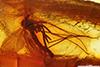 http://mczbase.mcz.harvard.edu/specimen_images/entomology/paleo/large/PALE-7298_Mycetophilidae.jpg