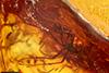 http://mczbase.mcz.harvard.edu/specimen_images/entomology/paleo/large/PALE-7300_Mycetophilidae.jpg