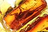 http://mczbase.mcz.harvard.edu/specimen_images/entomology/paleo/large/PALE-7303_Mycetophilidae.jpg