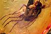http://mczbase.mcz.harvard.edu/specimen_images/entomology/paleo/large/PALE-7440_Dolichopodidae.jpg