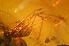 http://mczbase.mcz.harvard.edu/specimen_images/entomology/paleo/large/PALE-7440_syn2_Acari.jpg