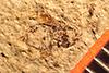 http://mczbase.mcz.harvard.edu/specimen_images/entomology/paleo/large/PALE-7468_Catopamera_bradleyi_holotype.jpg