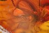 http://mczbase.mcz.harvard.edu/specimen_images/entomology/paleo/large/PALE-7669_syn1_Sciaridae.jpg