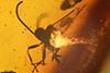 http://mczbase.mcz.harvard.edu/specimen_images/entomology/paleo/large/PALE-7676_Braconidae_qm.jpg