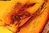 http://mczbase.mcz.harvard.edu/specimen_images/entomology/paleo/large/PALE-7863_Nematocera.jpg