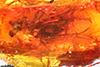http://mczbase.mcz.harvard.edu/specimen_images/entomology/paleo/large/PALE-7886_Brachycera.jpg