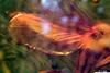 http://mczbase.mcz.harvard.edu/specimen_images/entomology/paleo/large/PALE-7890_syn2_Mycetophilidae.jpg