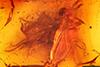 http://mczbase.mcz.harvard.edu/specimen_images/entomology/paleo/large/PALE-7907_Dolichopodidae.jpg