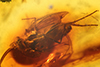 http://mczbase.mcz.harvard.edu/specimen_images/entomology/paleo/large/PALE-7930_Dolichopodidae.jpg