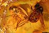 http://mczbase.mcz.harvard.edu/specimen_images/entomology/paleo/large/PALE-7932_Dolichopodidae.jpg
