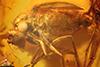 http://mczbase.mcz.harvard.edu/specimen_images/entomology/paleo/large/PALE-7932_syn2_Dolichopodidae.jpg