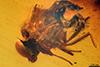 http://mczbase.mcz.harvard.edu/specimen_images/entomology/paleo/large/PALE-7975_Dolichopodidae_2.jpg
