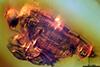 http://mczbase.mcz.harvard.edu/specimen_images/entomology/paleo/large/PALE-8002_Dolichopodidae.jpg
