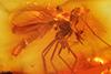 http://mczbase.mcz.harvard.edu/specimen_images/entomology/paleo/large/PALE-8016_syn1_Chironomidae.jpg