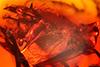 http://mczbase.mcz.harvard.edu/specimen_images/entomology/paleo/large/PALE-8036_Dolichopodidae_qm.jpg