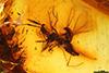 http://mczbase.mcz.harvard.edu/specimen_images/entomology/paleo/large/PALE-8044_Cecidomyiidae.jpg