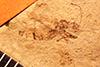 http://mczbase.mcz.harvard.edu/specimen_images/entomology/paleo/large/PALE-808_Rhepocoris_propinquans_type.jpg