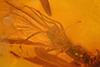 http://mczbase.mcz.harvard.edu/specimen_images/entomology/paleo/large/PALE-8305_syn2_Sciaridae.jpg