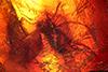http://mczbase.mcz.harvard.edu/specimen_images/entomology/paleo/large/PALE-8310_Mycetophilidae_1.jpg