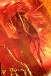 http://mczbase.mcz.harvard.edu/specimen_images/entomology/paleo/large/PALE-8318_Mycetophilidae_qm.jpg