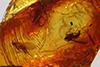 http://mczbase.mcz.harvard.edu/specimen_images/entomology/paleo/large/PALE-8320_Sciaridae.jpg