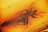 http://mczbase.mcz.harvard.edu/specimen_images/entomology/paleo/large/PALE-8355_Sciaridae.jpg