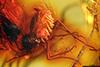 http://mczbase.mcz.harvard.edu/specimen_images/entomology/paleo/large/PALE-8357_syn1_Mycetophilidae.jpg