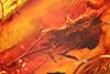http://mczbase.mcz.harvard.edu/specimen_images/entomology/paleo/large/PALE-8420_Dolichopodidae.jpg