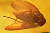 http://mczbase.mcz.harvard.edu/specimen_images/entomology/paleo/large/PALE-8544_Psychodidae.jpg