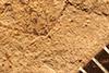 http://mczbase.mcz.harvard.edu/specimen_images/entomology/paleo/large/PALE-857_Rhepocoris_propinquans_type_2.jpg