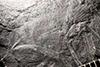 http://mczbase.mcz.harvard.edu/specimen_images/entomology/paleo/large/PALE-8615a_Etoblattina_gorhami_holotype.jpg