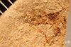 http://mczbase.mcz.harvard.edu/specimen_images/entomology/paleo/large/PALE-861_Rhepocoris_propinquans_type.jpg