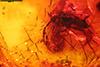http://mczbase.mcz.harvard.edu/specimen_images/entomology/paleo/large/PALE-8827_Dolichopodidae.jpg